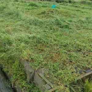 畑の草刈り終わり。雨の中やった