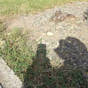 草取りした。写っている影がプーさんみたいなのだ