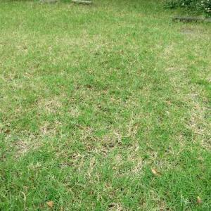 2時間たっぷり芝刈りしたら、クタクタで汗びっしょり。シャワーあびた