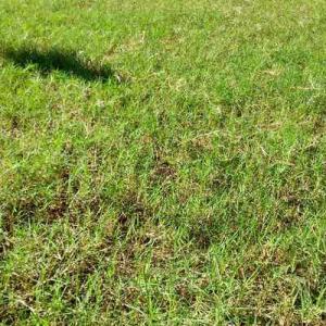 芝刈り草取り、肥料散布