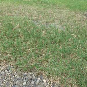 芝刈り草取り、水撒きしたよ