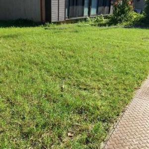 生け垣の剪定、芝刈り、草取り。汗びっしょり