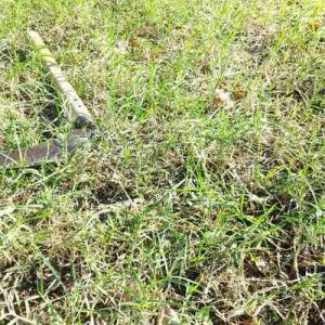 カラッと晴れて草取り芝刈り。いい気分