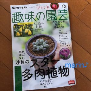 NHKテキスト 趣味の園芸