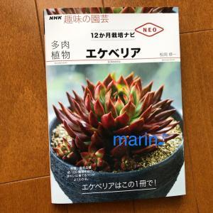 NHK 趣味の園芸 多肉植物 エケベリア