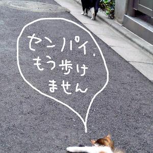 今日のにゃんこ#255 野垂れ死(んでない)