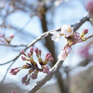 ステッラポラーレでお祝いランチ★2020 3月
