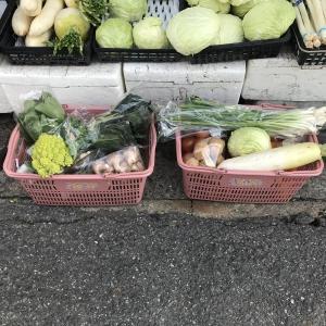 むらつかの野菜