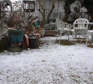 初雪!サム!葉牡丹   12/5誕生花・・・シンビジューム