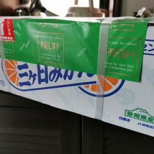 R1年度ふるさと納税 静岡県 浜松市 「三ケ日みかん 約5kg」