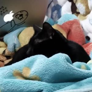 ベッドに入る10分前の猫たち