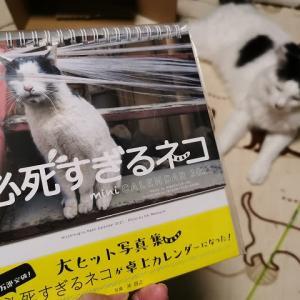 『必死すぎるネコ』