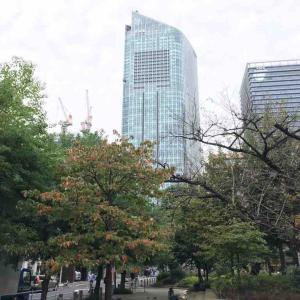 新橋の秋はアメリカハナミズキの紅葉から