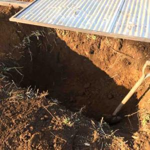 里芋類の収穫と種芋などの保管穴掘り