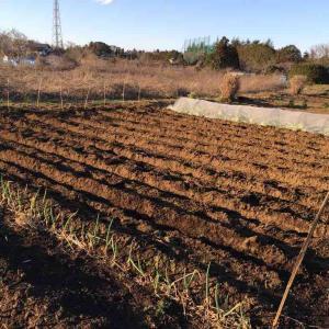 午前中確定申告、午後ジャガイモ畝作り