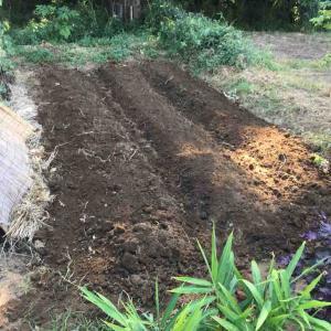 秋ジャガイモ植え場所作りに苦労