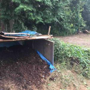 牛糞堆肥移動>種蒔き>青唐辛子の処理