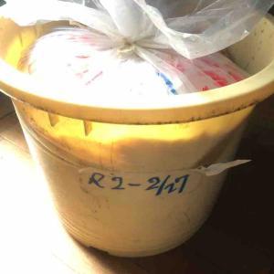 昨年仕込んだ味噌樽を開封