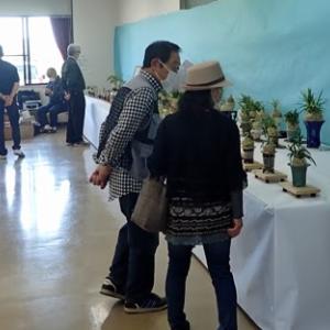 「土佐竹蘭保存会の「セッコク」「風蘭」「山野草等」の展示会の最終日でした。」「その様子を報告します!」最終日の展示会場の様子と展示会中、人気のあった風蘭を紹介します。