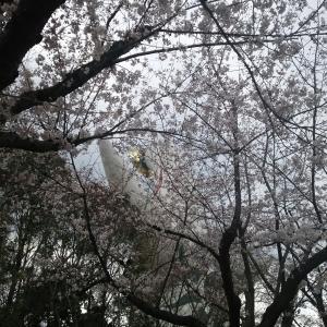 万博公園でお花見
