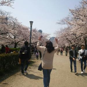桜満開、大いなる夢
