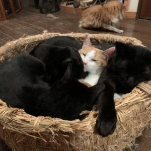 黒猫に埋もれる