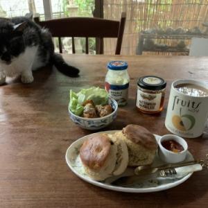 猫とアフタヌーンティ