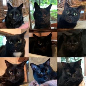 一日遅れ企画 黒猫感謝の日