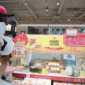 久しぶり!群馬県産アカシア蜂蜜使用ラングドシャ試食販売会開催!