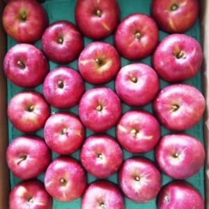 りんご「紅玉」届きました!!!