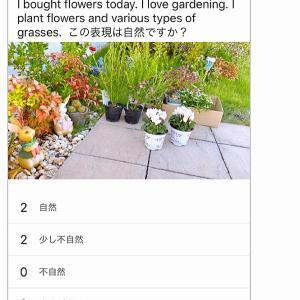 【英語3行日記】今日は庭いじり様々な草花を植えました