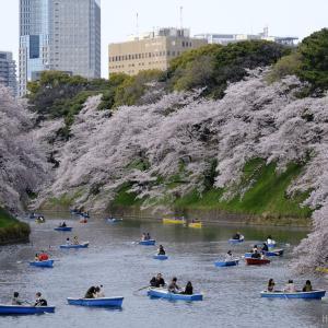 【定点撮影】千鳥ヶ淵の桜 2016