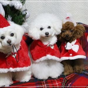 メリークリスマス と お知らせ ♪ の 日記
