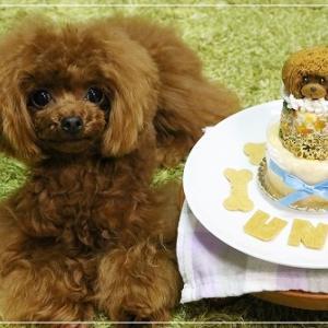 お誕生日ケーキ に くぎ付け うにうに ♪ の 日記