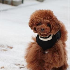 雪遊びチャレンジ ・ 再 ♪ の 日記