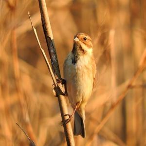 野鳥40種