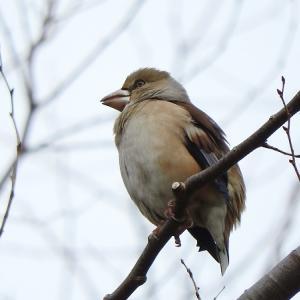 野鳥52種(水元公園)