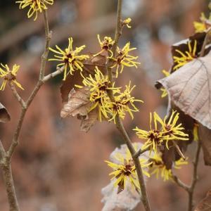 2月撮った花々