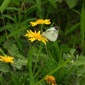 蝶々とトンボにミツバチ