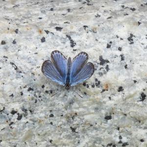 御影石と蝶スズメ