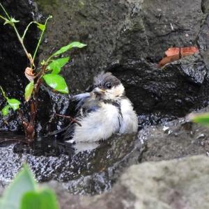 新宿御苑の野鳥