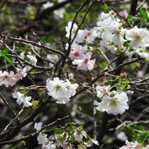 新宿御苑の花・蝶・トンボ