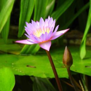 新宿御苑温室の花
