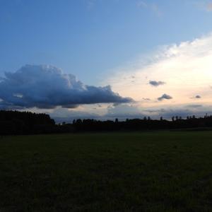 夕散歩と珍鳥
