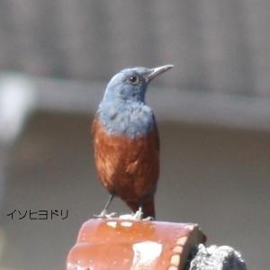 思いがけない鳥