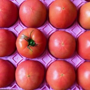 *岐阜産夏秋トマトで、トマトと豚肉のチリソース。《岐阜県産トマトで夏のスタミナおかずモニター参加中♪》 *母と本の交換会。 *猫も伸びる夏。