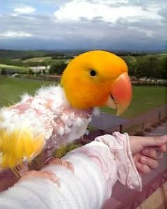 鳥の病院へ行ってきました♪