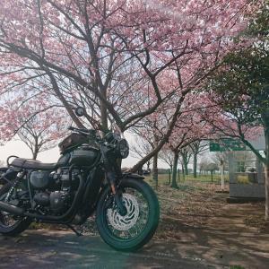 桜とボニーオイル交換2回目♪