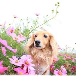 ★お花を愛でるワンコ風(*´艸`)★
