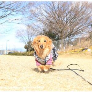 ★河津桜の偵察に♪★